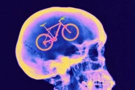 Seguridad en Bicicletas - Bici En Cerebro - Revista de bicicletas